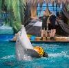 Дельфинарии, океанариумы в Ессентуках