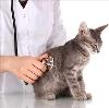Ветеринарные клиники в Ессентуках